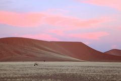 Pink sunset clouds over red Namib sand dunes Stock Image