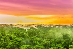Pink sunset over the Amazon rain forest in Brazil stock photography