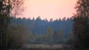 Pink sunset over the field stock video footage