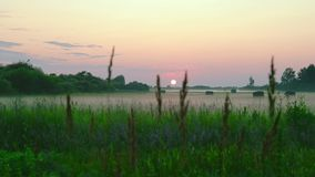 Pink sunset rural landscape. Countryside green meadow scene. White fog above land summer morning or evening. Green grass stock video footage