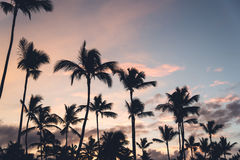 Pink sunset with silhouettes of palm trees. Toned Stock Photos