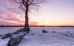 Pink sunset with a tree on a stone hillock. Pink sunset on the snowy bank of the Ob River near Novosibirsk. Tree on a stony hillock. Lilac snow. Siberia, Russia royalty free stock photos