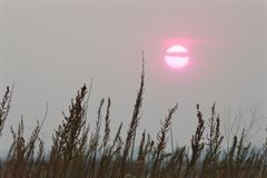 Pink sunset sun in a misty gray sky above the stems of dry brown grass royalty free stock images