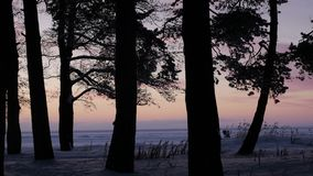 Pink sunset through the trees. To the sea stock video footage