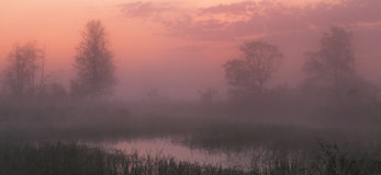 Pink sunset under lake Stock Images