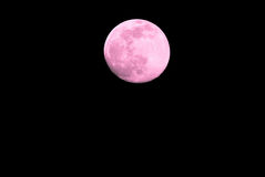 Pink super moon. Super moon on black background Stock Photos