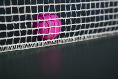 Pink table tennis ball  in the net. Pink table tennis table and detail of net Royalty Free Stock Images