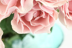 Pink Tea Roses Stock Photo