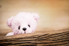 Pink Teddy Bear toy alone on wood in front brown background Royalty Free Stock Photo