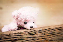 Pink Teddy Bear toy alone on wood in front brown background. Stock Images