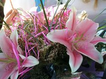 Pink to white gradient lilies Stock Images