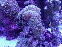 Aquarium sea life formation. Pink toned aquarium sea life. Rock and coral formation. Triangular shaped plant life Stock Photos
