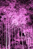 Pink toned snapshot of banboo copse in the night. Illuminated foreground stock photography