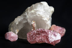 Pink Tourmaline White Quartz. Three pieces of pink tourmaline (rubellite) and one piece of white quartz with small vein of pink tourmaline, black background Royalty Free Stock Photography