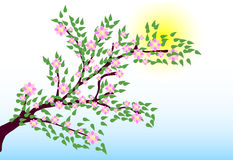 Pink tree. The nature a tree the sun Stock Photos