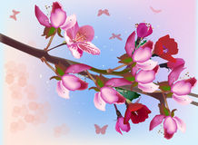 Pink tree blossom and butterflies on blue Stock Image
