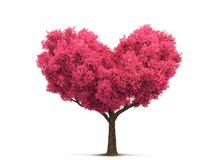 Pink tree in heart shape Stock Images