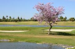 Pink tree next to lake Stock Photo