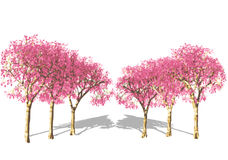 Pink Tree in spring. Royalty Free Stock Image