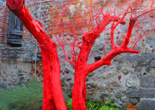 Pink tree trunk. A pink tree trunk in front of an ancient house Royalty Free Stock Photo