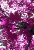 Pink tree Stock Photos