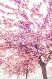 pink trees Royaltyfri Bild