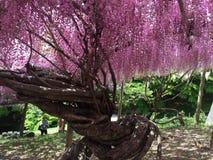 pink trees Fotografering för Bildbyråer