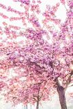 Pink trees Royalty Free Stock Image