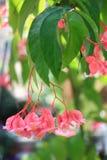 Pink Tropical Flower Stock Photos