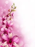 Pink tropical orchids Stock Photography