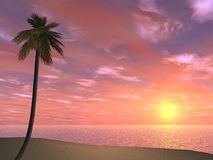 Pink Tropical Sunset Royalty Free Stock Images