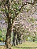 Pink trumpet blossom Stock Photos