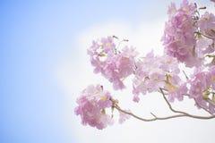 Pink trumpet flower Royalty Free Stock Photos