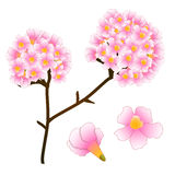 Pink Trumpet Flower Tree. isolated on White Background. Vector Illustration Stock Photos