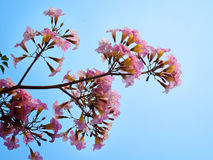 Pink sweet dream feeling Royalty Free Stock Photography