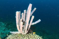 Pink tube sponge Royalty Free Stock Images