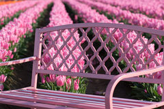 Pink Tulip Bench stock images