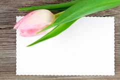 Pink tulip and blank card Royalty Free Stock Photography
