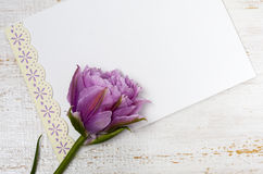 Pink tulip and blank greeting card Stock Images