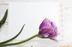 Pink tulip and blank greeting card Royalty Free Stock Image