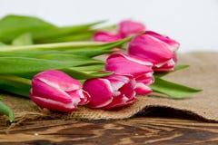 Pink Tulip Blooms Stock Image