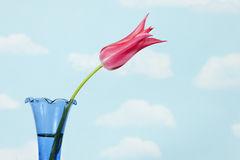 Pink Tulip in blue vase with sky Stock Images