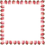 Pink Tulip Boarder Royalty Free Stock Photography