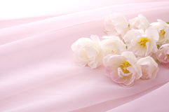 Pink tulip bouquet. Pink tulips on pink chiffon cloth Royalty Free Stock Image