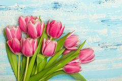Pink tulip bouquet on blue wooden background, copy space. Beautiful flowers Stock Image