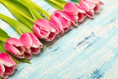 Pink tulip bouquet on blue wooden background, copy space. Beautiful flowers Royalty Free Stock Images