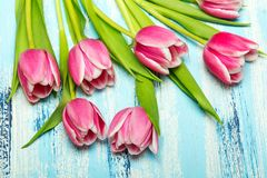 Pink tulip bouquet on blue wooden background, copy space. Beautiful flowers Royalty Free Stock Photos