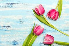 Pink tulip bouquet on blue wooden background, copy space. Beautiful flowers Royalty Free Stock Photo