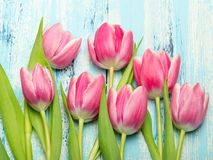 Pink tulip bouquet on blue wooden background, copy space. Beautiful flowers Royalty Free Stock Image