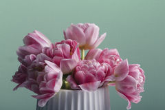 Pink tulip bouquet on a green background Royalty Free Stock Images
